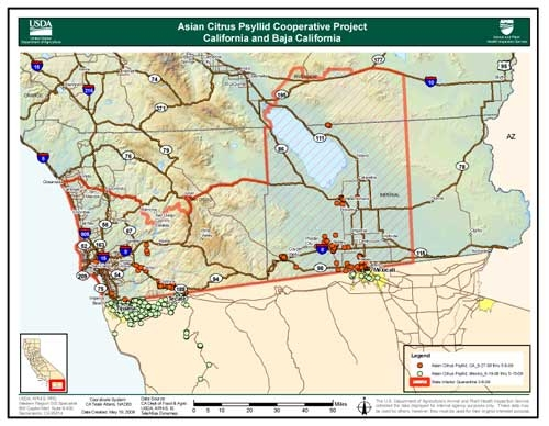 USDA's ACP map shows where the pest has been found.