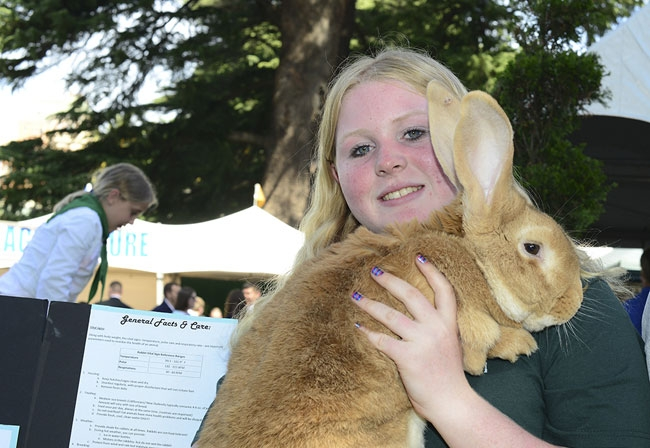 The UCCE 4-H program focuses on  citizenship, leadership and learning life skills. (Photo: Kathy Keatley Garvey)