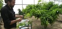 Georgios Vidalakis vows to protect the Washington navel 'mother tree.' for ANR News Blog Blog