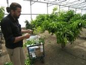 Georgios Vidalakis vows to protect the Washington navel 'mother tree.'