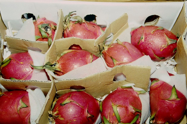 Box of dragon fruit (Photo: Adel Kader)