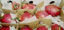 Box of dragon fruit (Photo: Adel Kader) for ANR News Blog Blog