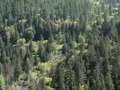 Forest study finds fewer big trees and an increasing number of small trees. (Photo of Tenaya Canyon in the Sierra Nevada from Wikimedia Commons.)