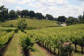 Foothill vineyards have water worries.