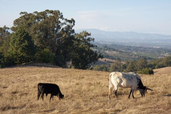 Central Coast ranchers are facing a 'bust cycle' due to drought.