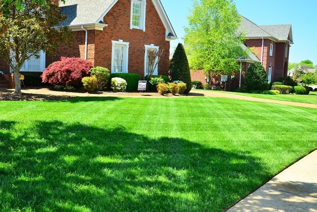 Removal of lush green lawns will require adjustment for the lawn care industry.