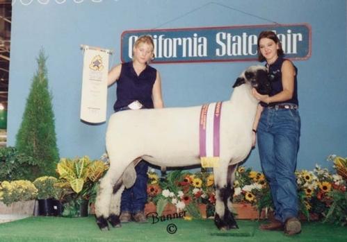 animal welfare  14   cow  1   dairy  17   sheep  1   tail docking  1