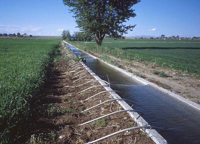 California's irrigated agriculture is suffering due to drought.
