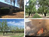 UC ANR experts provide perspective on drought in landscapes, orchards and wildfires.