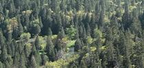 A coniferous forest along Tenaya Creek in the Sierra Nevada. (Photo: Wikimedia Commons) for ANR News Blog Blog