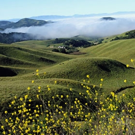 Rangeland owners may be able to sequester more carbon on their land.