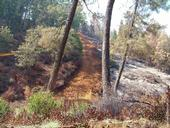 Fuel breaks, like this one in Yuba County, can help firefighters limit the spread of wildfire. (Photo: UC Regents)