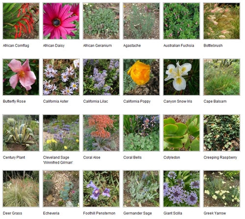 A sampling of the water-wise plants for Santa Clara County.