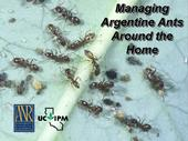 The opening screen of the UC IPM video about Argentine ants.
