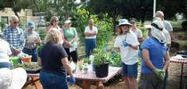 UCCE Master Gardeners of Santa Clara County conduct sustainable gardening and hands-on workshops for the public. for ANR News Blog Blog
