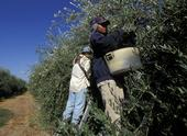Crops that require hand labor are more vulnerable to price fluctuations when immigration policies change.