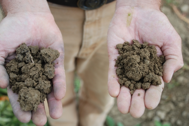 Healthy soil practices are evident in the soil on right compared to standard soil on left.