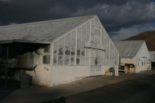 Greenhouses for ag research at UC Riverside.