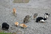All outdoor cats can pose risks to wildlife. Above a herd of feral cats gather in a vacant lot. (Photo: Wikimedia Commons)