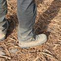 Boots on the ground where a former almond orchard stood. The shredded trees will be incorporated into the soil to build soil organic matter.