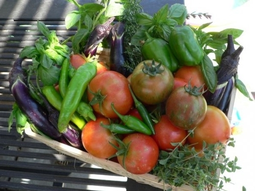 Tomatoes and other garden vegetables.