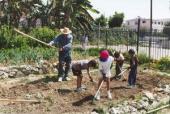 Urban gardening.