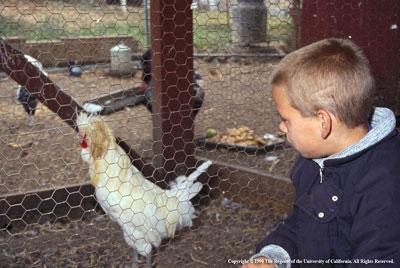 Backyard producers should also take precautions to avoid foodborne illness.