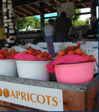 Apricots are featured in Patterson.