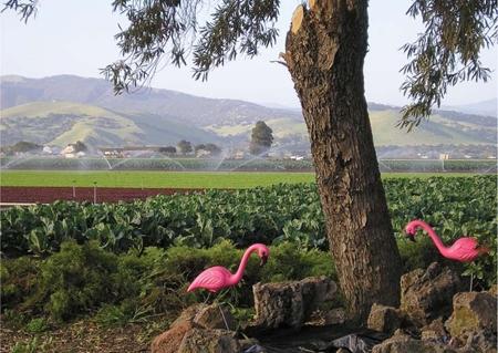 An 'urban edge' near Monterey. (Photo: California Agriculture journal)