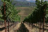 California winemakers are concerned about new Chinese tariffs on wine imports, even though per capita consumption of wine in the country remains low. 'It's all about the future,' say UC ANR experts. (Photo: UCCE Mendocino County)