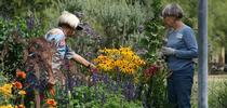 Since the UC Master Gardener program's inception, more than 5 million hours of volunteer service have been donated. for ANR News Blog Blog