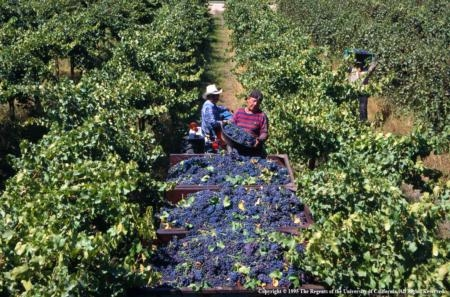 UC supports sustainable farming systems.