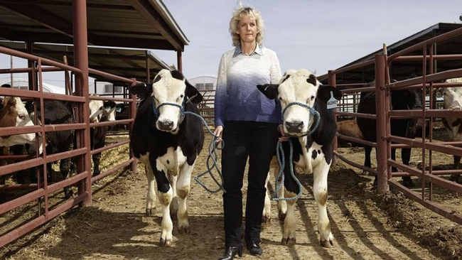 Alison Van Eenennaam with hornless cattle. (Photo: Aleksandra Domanovic and Spencer Lowell)