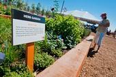 An herb garden in the Farm & Food Lab in Orange County.