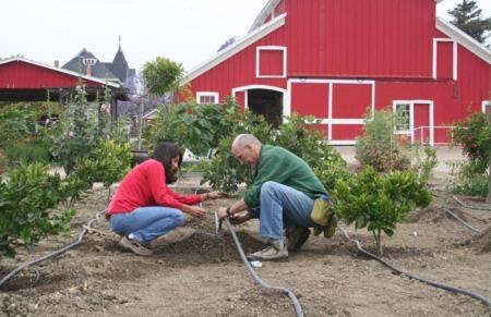 Proper irrigation saves water.