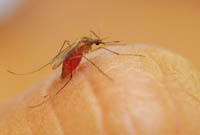 Mosquitoes are repelled by DEET.