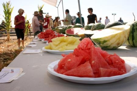 A watermelon field day at Kearney. (Photo: B. Dawson)