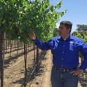 UCCE specialist Kaan Kurtural, pictured above, said labor costs about 7 cents per vine with mechanical management vs. $1 per vine using conventional labor.