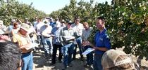 UCCE entomology advisor David Haviland, right, speaks with farmers and pest control advisors in a pistachio orchard. for ANR News Blog Blog