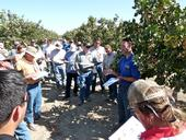 UCCE entomology advisor David Haviland, right, speaks with farmers and pest control advisors in a pistachio orchard.