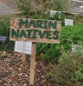 Native plants on display at an existing Marin County community garden.