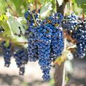High-end wine sales will likely be hurt by restrictions in place to curb the coronavirus. (Photo: Pixabay)