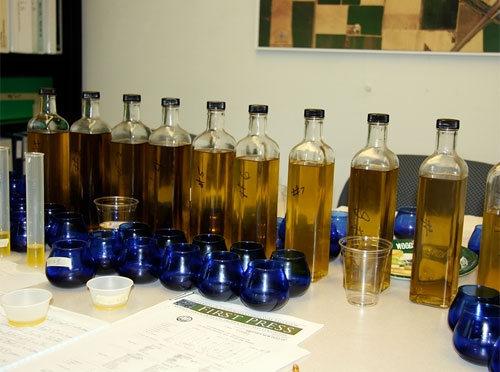 Blind sensory testing revealed many imported olive oils labeled