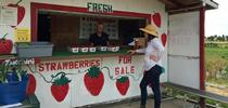 San Joaquin Valley strawberry stands are expected to be open by April 10. for ANR News Blog Blog