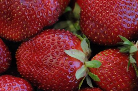 Strawberries make a significant contribution to the Ventura County economy.