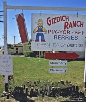 Gizdich Ranch operates a U-pick operation.