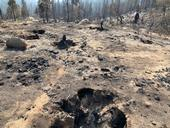 An area near Shaver Lake where the 2020 Creek Fire burned most of the living vegetation and old tree stumps. (Photo: Jeannette Warnert)