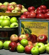 Grapes, Sonoma County's No. 1 crop, were valued at about $390 million in 2010; the Gravenstein apple checked in at No. 13, with $1.7 million.