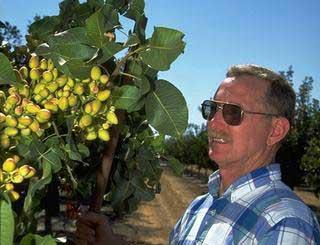 UC entomologist Walt Bentley with pistachios.