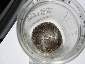 Hundreds of eye gnats captured in a trap.